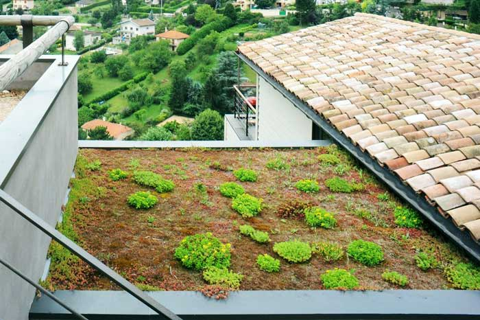Rainwater-filtering green roof