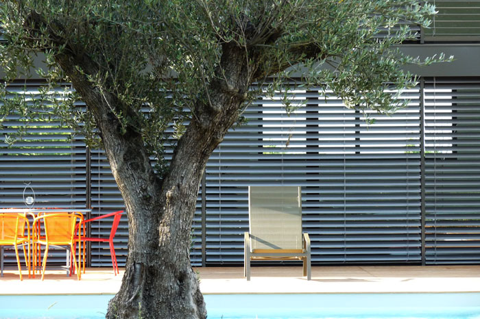 Tree in front of swimming pool and terrace